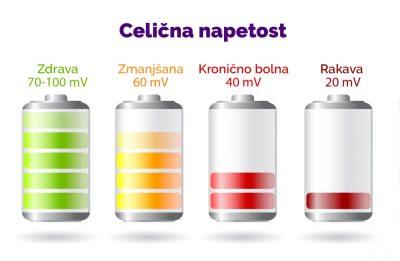 Celična_napetost_2